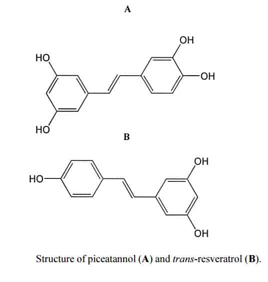 structure comparison of piceatannol and trans-resveratrol