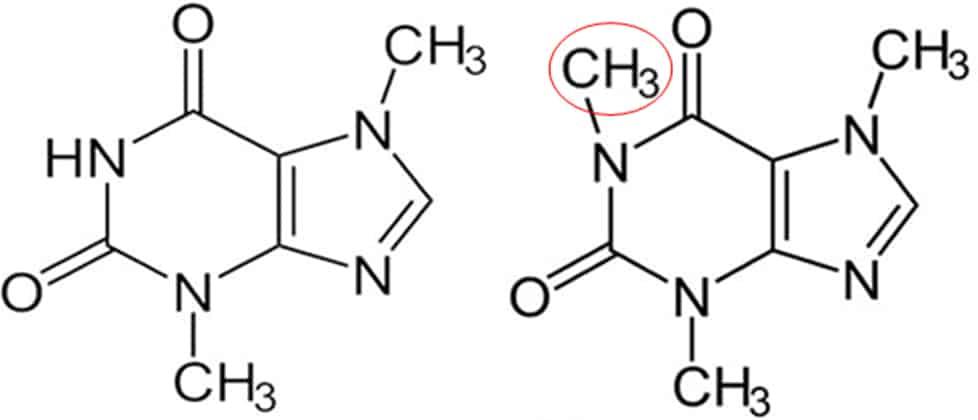 theobromine-vs-caffeine