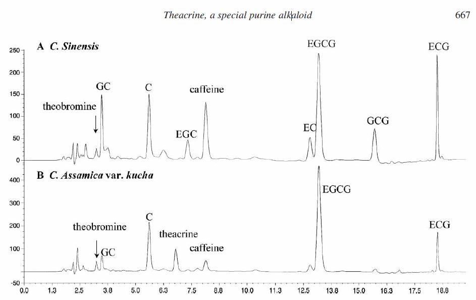 major purine alkaloids and polyphenols in Cammelia assamica var. kucha