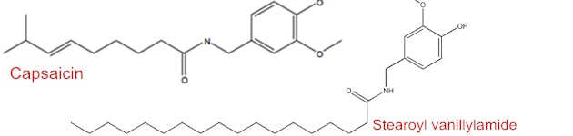 Stearoyl vanillylamide VS capsaicin